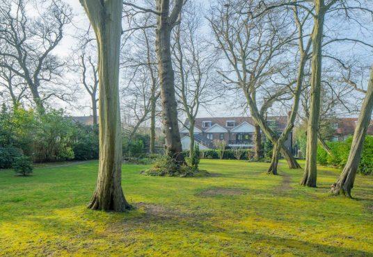 winnington road garden 3